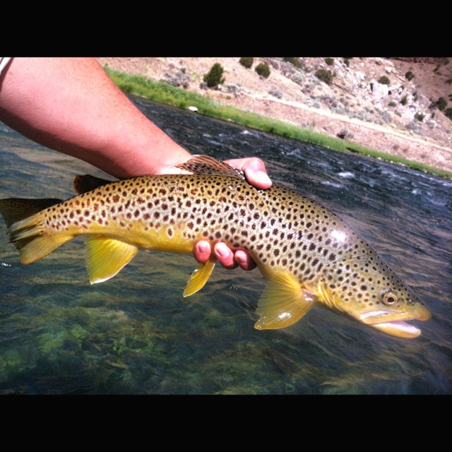 17 best images about wyoming fly fishing on pinterest | plymouth, Fly Fishing Bait