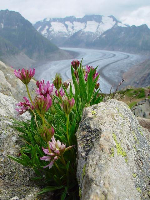 Icy Beauty Beautiful Nature Nature Beautiful Flowers
