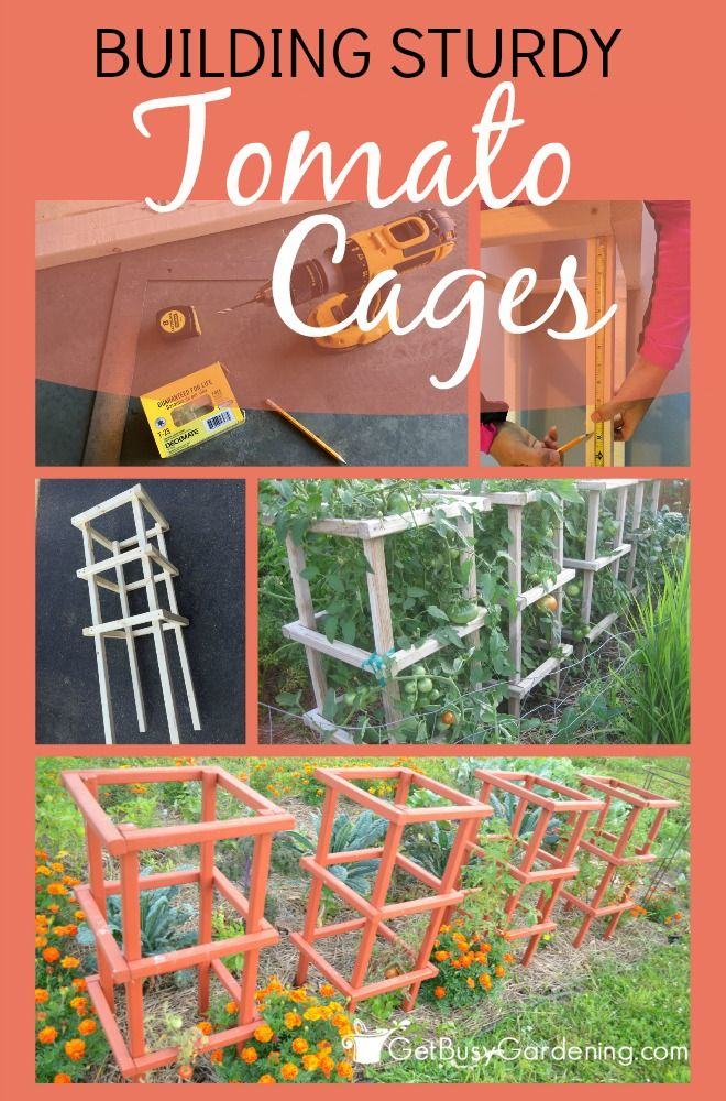 I have such a problem staking my tomatoes, they always seem to collapse once they get huge in they summer. I love, love these DIY sturdy tomato cages!! I'm totally going to make these for my tomatoes this year.