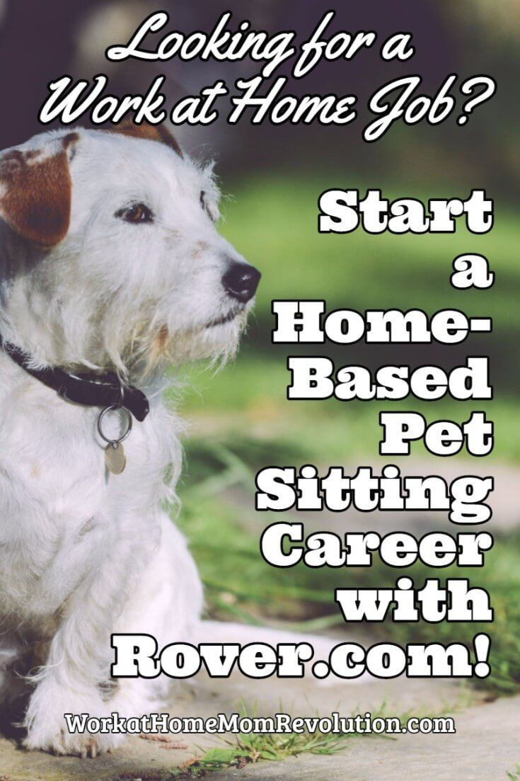 Rover.com is seeking professional dog sitters, casual dog lovers, and anyone who wants to earn a side income. Pet sitting is an excellent home-based business! You can limit your work at home pet sitting business to just dogs or just cats, or you can start a dog walking business! This is an awesome extra money opportunity! If you want to work from home, and you've been thinking  about starting a home business, then a pet sitting business might be perfect for you!