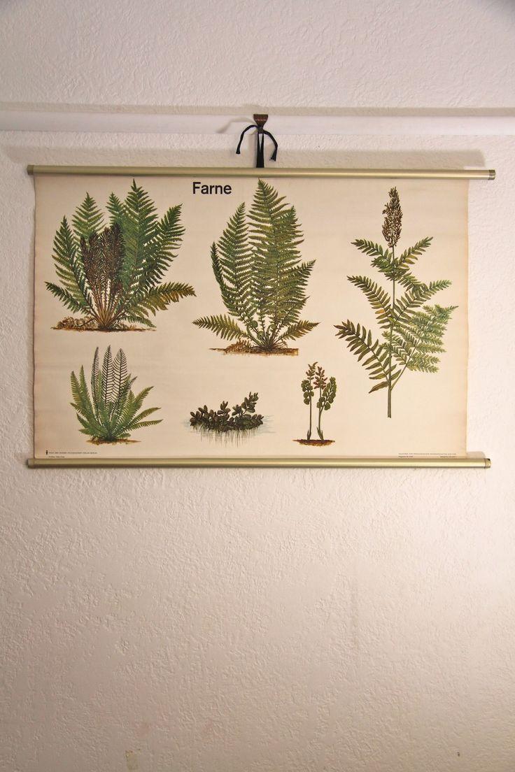 fern chart