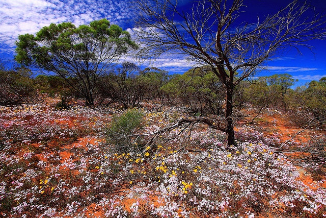 Gascoyne Murchison Outback, Australia - The outback is so . . . vast. I would just love to see part of it.