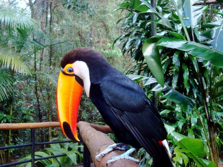 субтропики россии птицы фото вашему вниманию