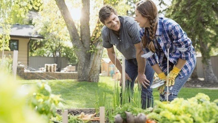 Gemüsebeet anlegen: Die besten Tipps