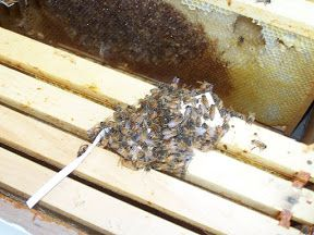 Basic Beekeeping: The Beekeeper's Calendar Of Important Events