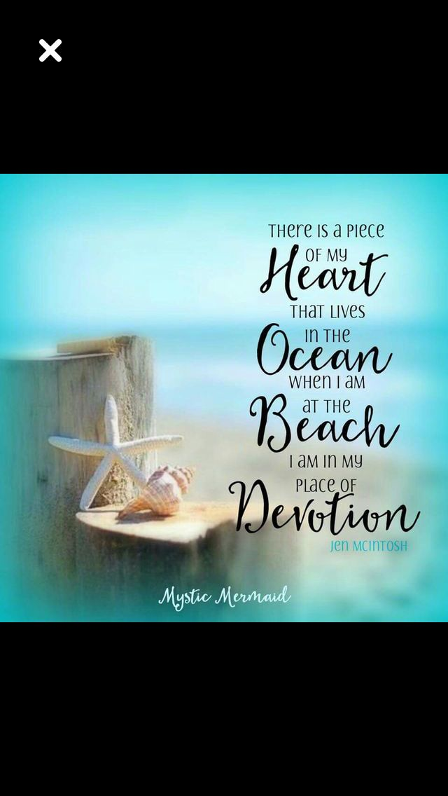 94 Best Sea Shell Quotes Images On Pinterest Beach