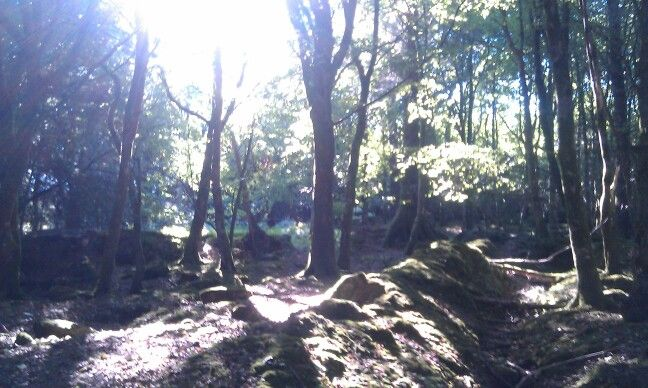 Glen of Imaal, Wicklow, Ireland. Through the trees :)