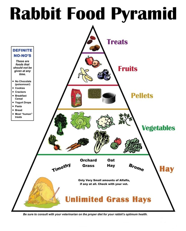 """""""Rabbit Food Pyramid"""" - I don't agree with the vegetable part. While rabbits should have unlimited grass hay, they should have a main diet of quality pellets; vegetables and fruits are supplements (albeit important ones). Treats don't really belong on this pyramid; fruits and veggies are treats enough for rabbits. Store-bought treats, especially, are not healthy for rabbits."""