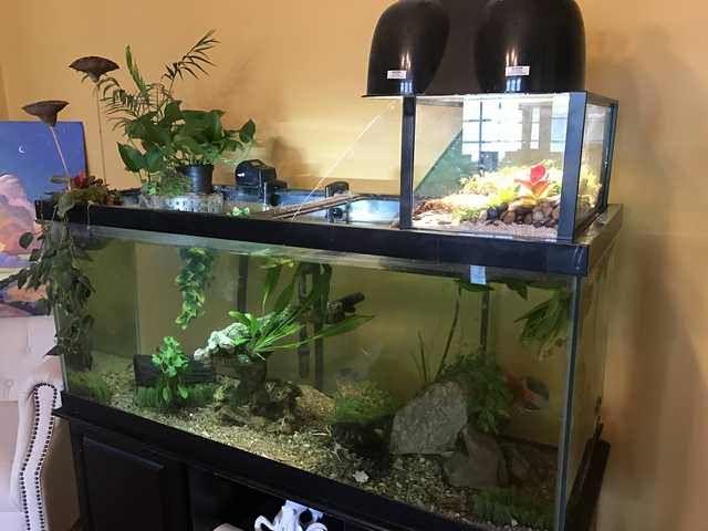 Healthy Turtle Aquarium Imgur Aquatic Turtle Tank Turtle