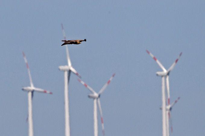 Der NABU hat Klage gegen die Genehmigung eines Windparks bei Jördenstorf im Landkreis Rostock (Mecklenburg-Vorpommern) eingereicht. Anlass der Klage ist das Vorkommen stark bedrohter Schreiadler in der Nähe der geplanten Anlage.