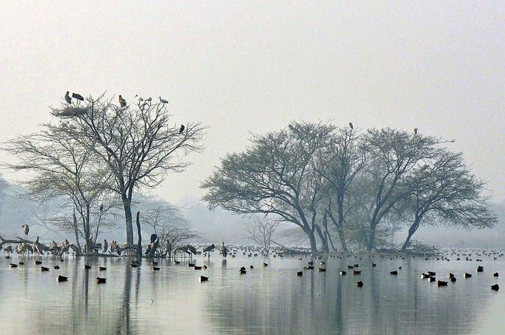 Haryana - Sultanpur Lake Bird Sanctuary sprawls over an area of 143sq.km and is located on the Gurgoan to Farukh Nagar Road, at a distance of 16 km from Gurgoan. It was founded by Dr. Salim Ali, well known for migratory and indigenous birds.