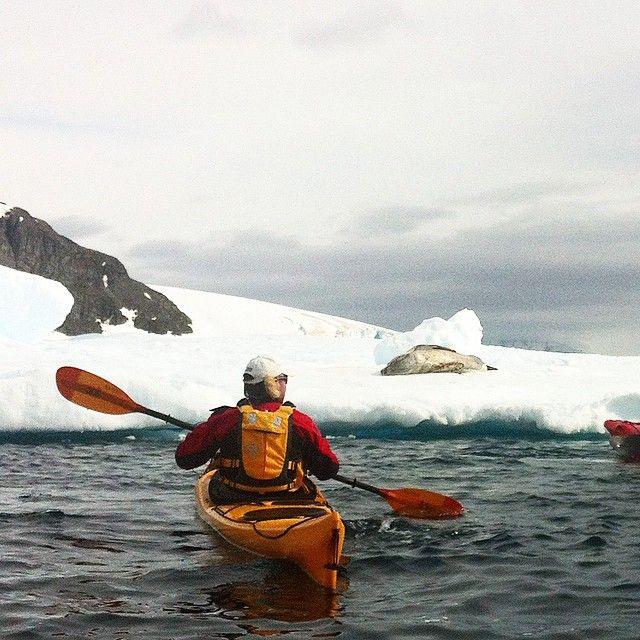 Tett på dyrelivet på kajakktur i Antarktis. Her er det en pelssel som slapper av på isen. #antarctica #travel  #wildlife #kayak #sea #furseal #seal #ice #snow