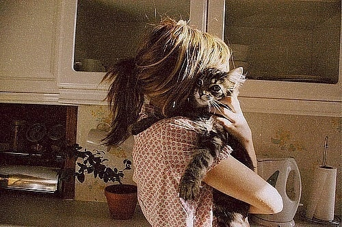 cat: Kitty Cat, Messy Hair, Best Friends, Cute Cat, Cat Lovers, Saturday Mornings, Cat Lady, Furry Friends, Baby Cat