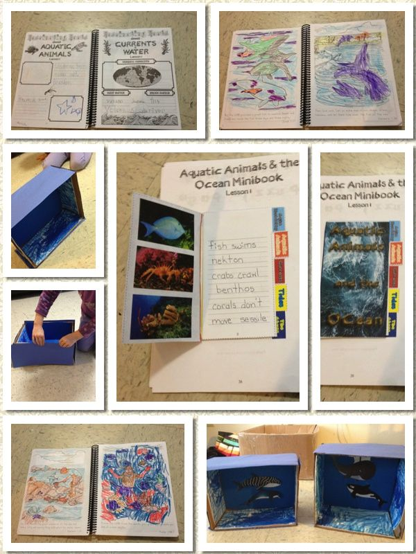 152 best Reviews - Young Explorers Series by Jeannie Fulbright ...