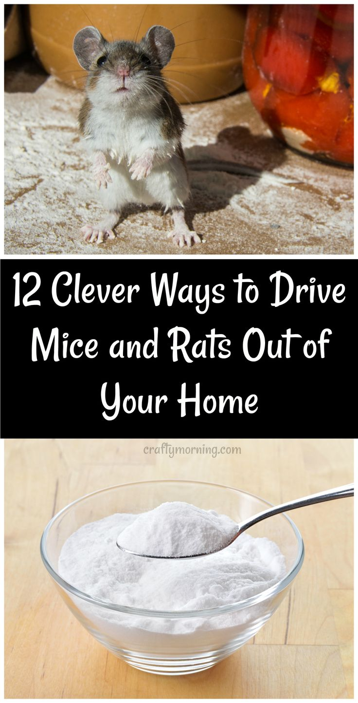 how to keep mice out of cars in winter