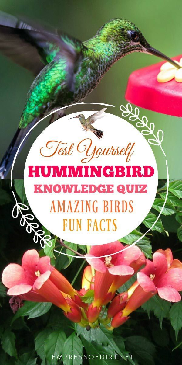 Hummingbirds are Amazing! Do You Know These Fact?