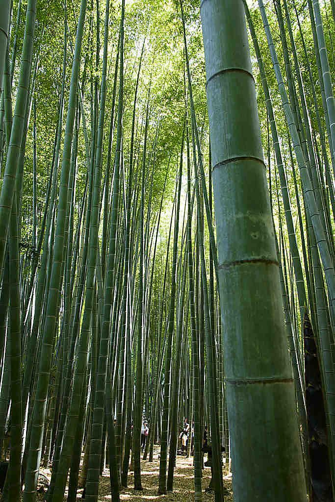 竹林の庭 報国寺