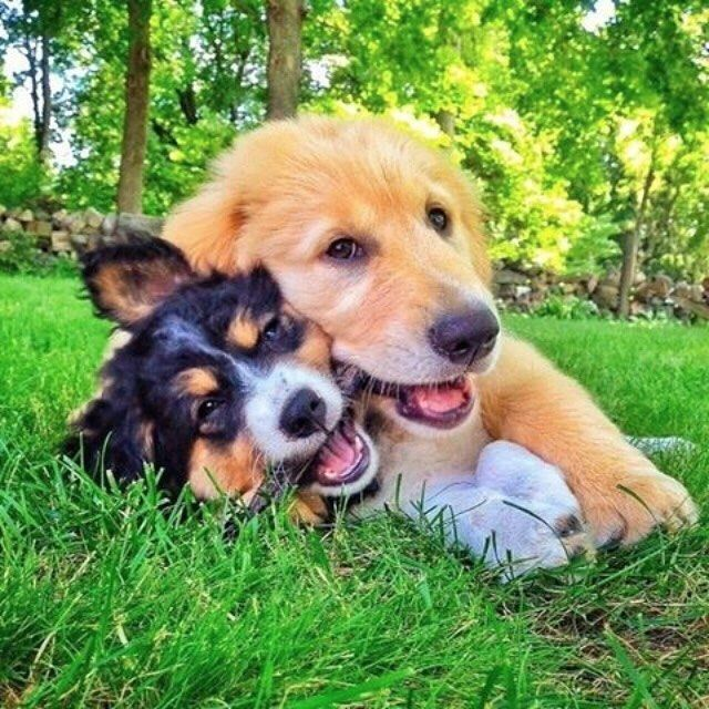 Good morning human. Double tap and tag your best friend below! #cute #happy #petsagram #doglover #hound #pup #dogoftheday #dogs #animals #pet #ilovemydog #dog #instagood #lovedogs #dogsofinstagram #lovepuppies #pets #instapet #adorable #picoftheday  #followforfollow #pictureoftheday #dogstagram