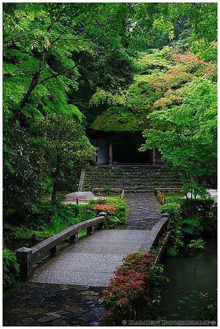 Spring leaves at Honen-in, Japan        (法然院)