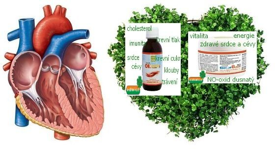 Srdce, cholesterol, bylinky, ok omega-3 complete, factor base no