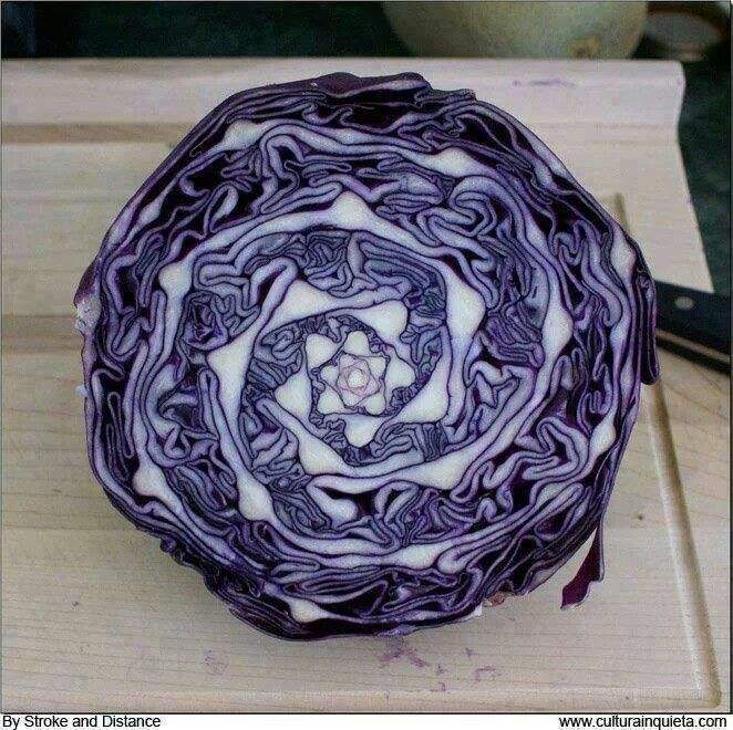 Cabbage Sacred Geometry
