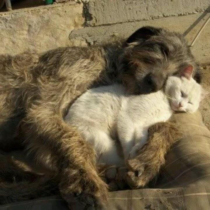 Cat & dog sleep together.
