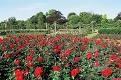 Queen Marys Rose Gardens