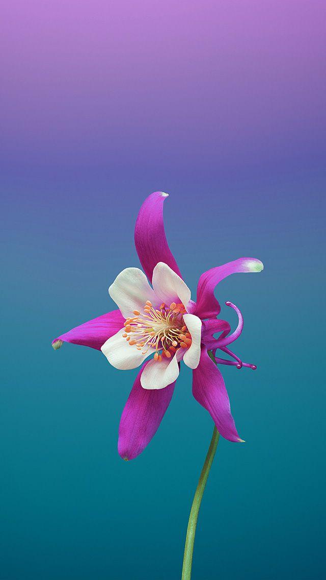 Bc07 Ios11 Apple Iphone8 Flower Art Illustration Abstraktnye Fony Abstraktnoe Yabloko Oboi