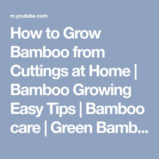 How to Grow Bamboo from Cuttings at Home | Bamboo Growing Easy Tips | Bamboo care | Green Bamboo - YouTube