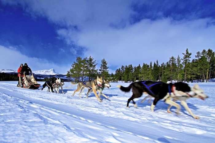 Enjoy a husky dog tour