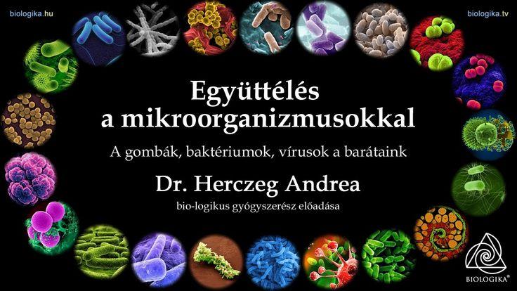 Együttélés a mikroorganizmusokkal - a gombák, baktériumok, vírusok a bar...