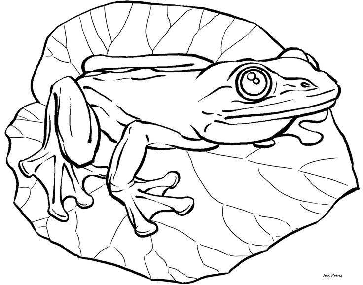 Frog Lily Pad Coloring Page Illustrator Pig