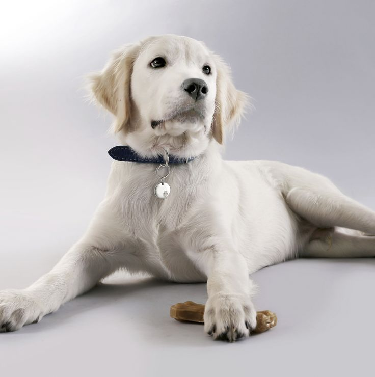 ENERGETIX is also offering the appropriate accessoires with integrated magnets for our four-legged friends