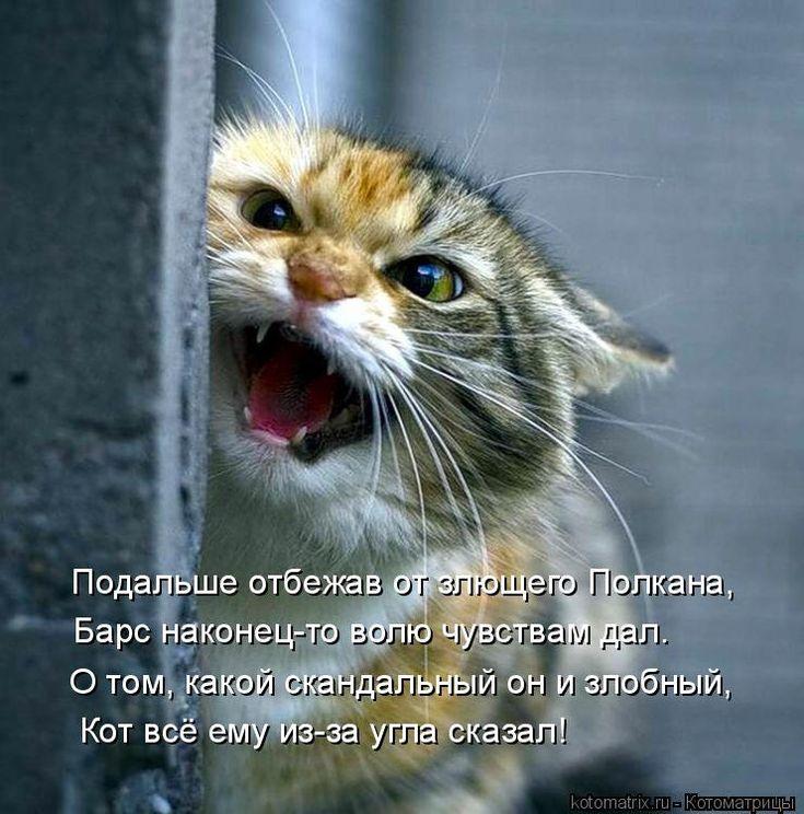 Подальше отбежав от злющего Полкана, Барс наконец-то волю чувствам дал. Кот всё ему из-за угла сказал...