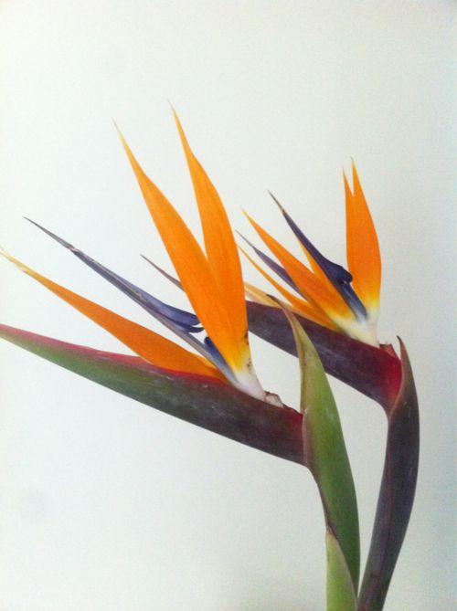 La Flor del Pájaro!