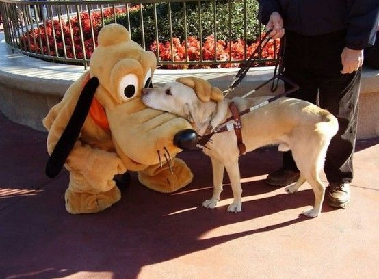A guide dog meeting Pluto.
