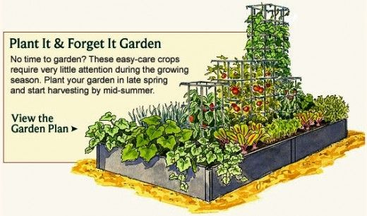Backyard Food Garden - garden plot design ideas
