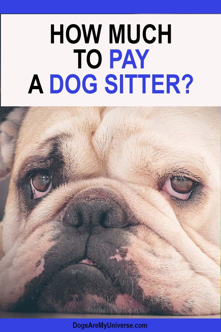 How Much To Pay A Dog Sitter Pet Health Insurance Dogs Pets