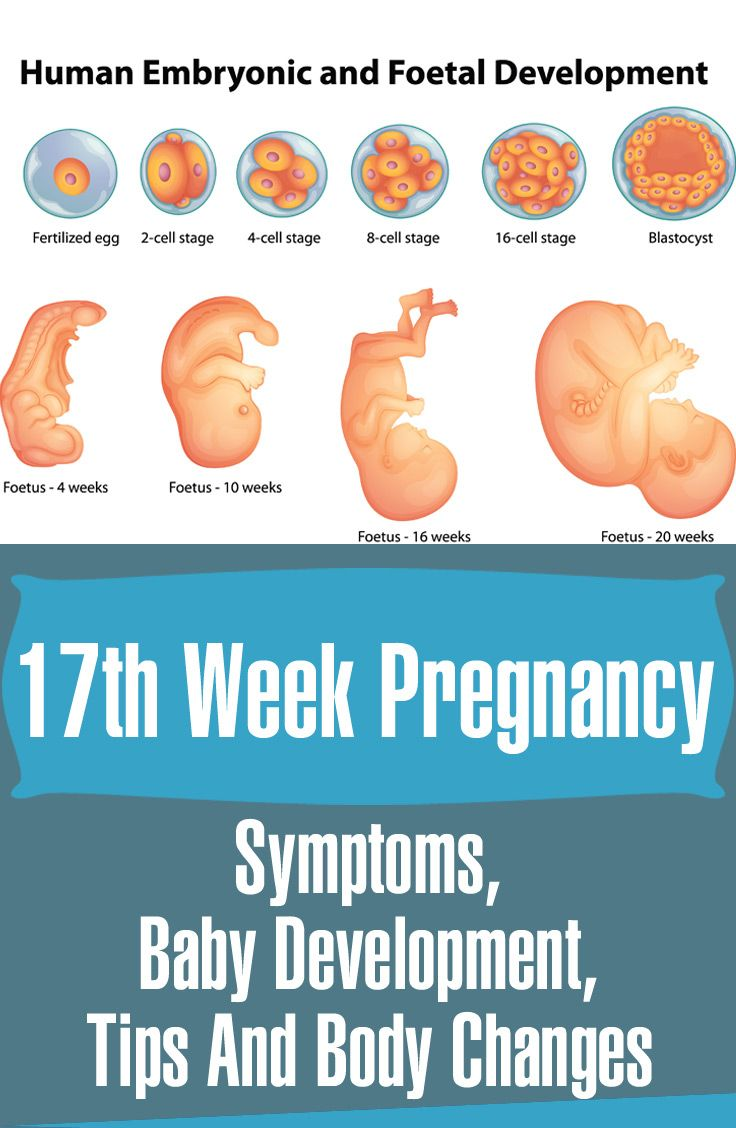 17 Weeks #Pregnant - Symptoms, Baby Development, #Tips And Body Changes