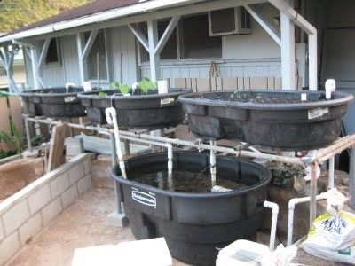Aquaponics Home System | Check out my personal Aquaponics project at www.davaoaquaponi...