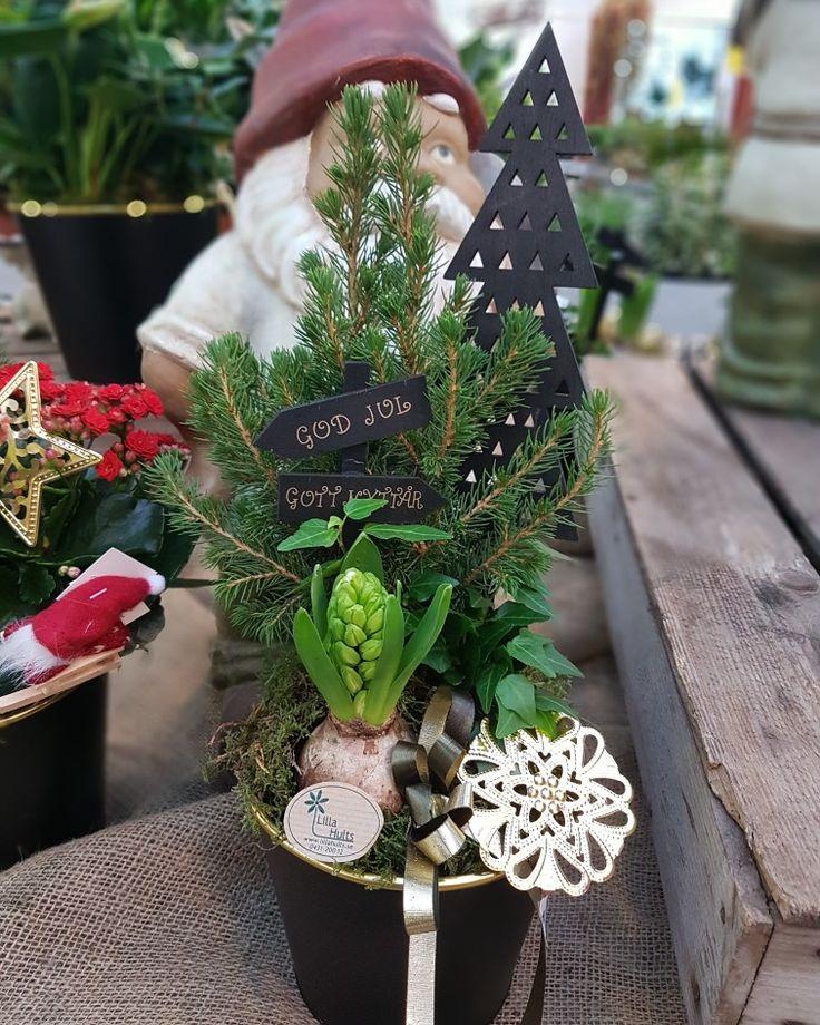 Härliga julen med sina olika skepnader i blomvärlden! 🎄🎄🎄#lillahults @lillahults