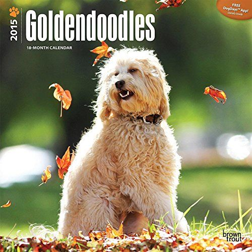 Goldendoodle - Dogs and Puppies Central