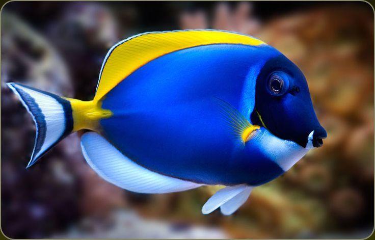 tropische vissen - Google zoeken