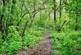 camino en el bosque caducifolio primavera Foto de archivo - 19555054 camino en el bosque caducifolio primavera