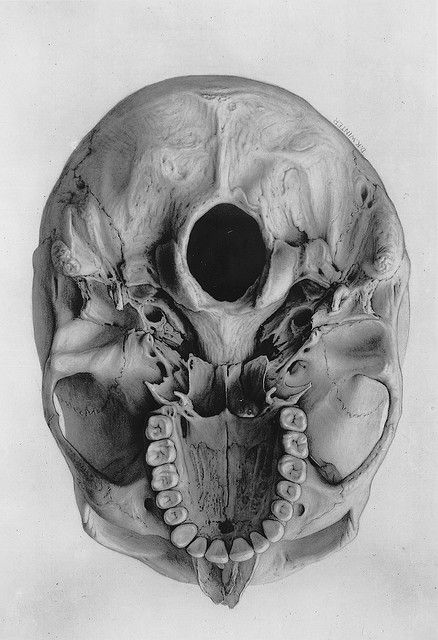 Bottom view of a human skull. Antique/vintage medical photography. 65-3579-3 | Flickr - Photo Sharing!