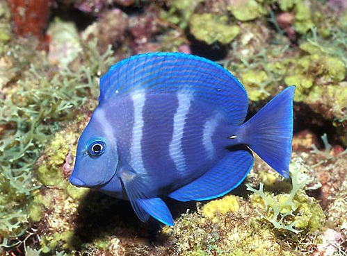 Tropical Fish | Live Fish for Sale Fishes Wallpaper -  photosheaf.com