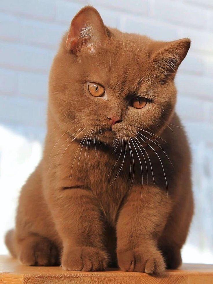 Pin Von Cassiopeia Wollner Auf Katzen In 2020 Susseste Haustiere Katzen Tiere