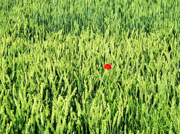 Conférence de Bruno Parmentier, ancien directeur général de l'ESA (Ecole supérieure d'agriculture d'Angers). Comment nourrir l'humanité du XXIème siècle sur une planète aux ressources déclinantes ? Car, si les progrès de l'agriculture ont été considérables depuis 50 ans (quantité, qualité, prix...), la dérégulation provoque des soubresauts difficilement compatibles avec le développement de l'agriculture, et la « révolution verte » ne tient plus ses promesses.