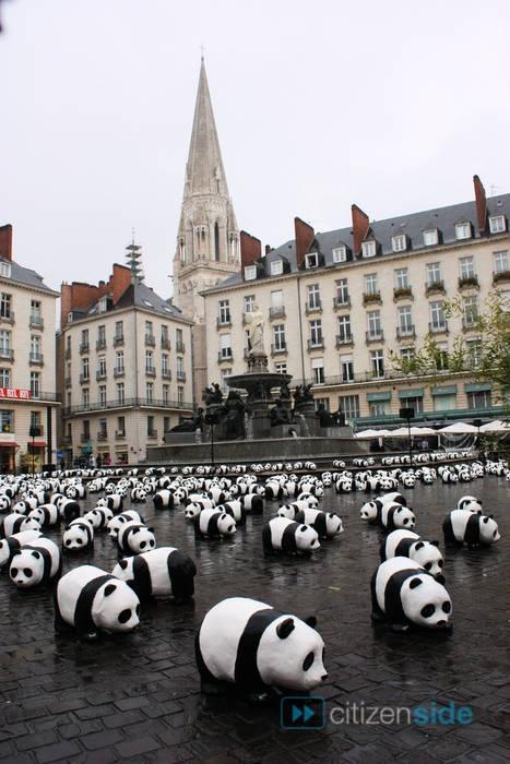 Insolite - 1600 pandas à Nantes - La Couv' - Citizenside (Nantes, Loire-Atlantique, FRANCE)