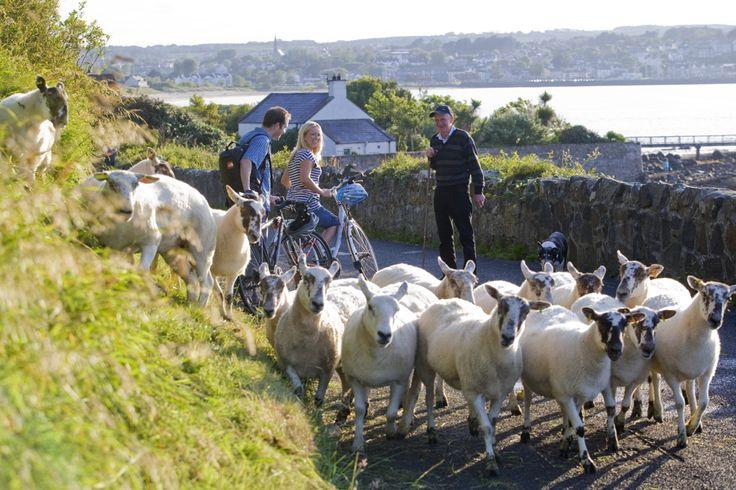 Vélo dans le Comté d'Antrim - Tourism Ireland